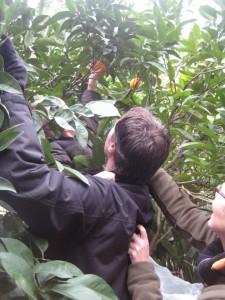 Sinasappels plukken