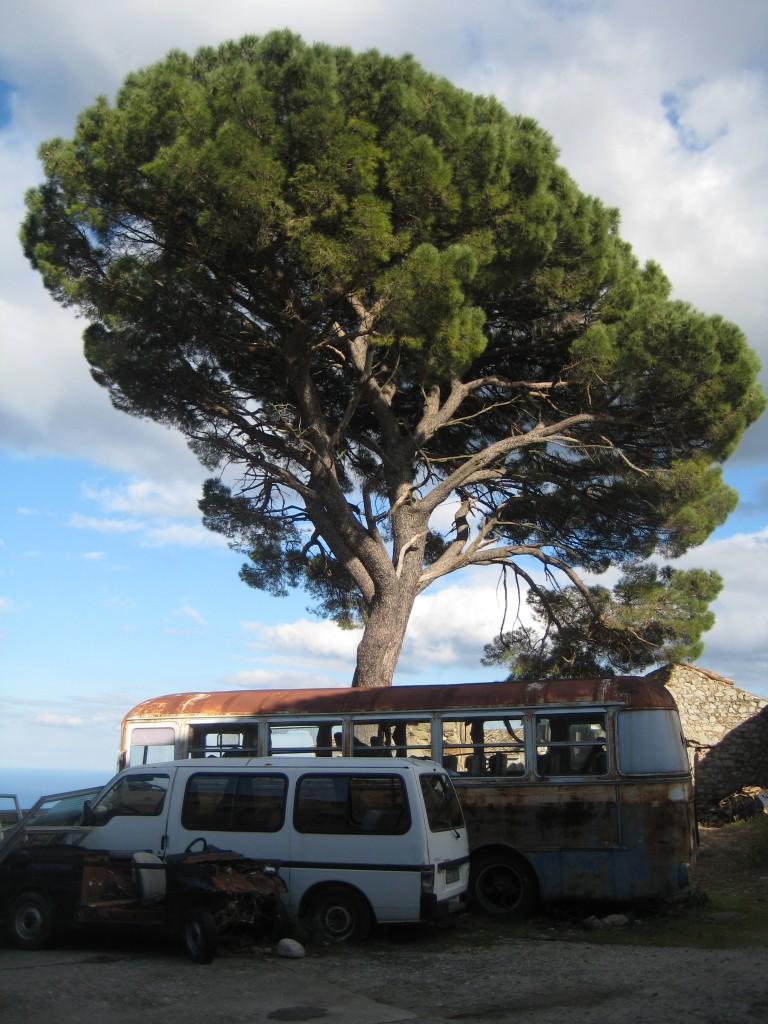 Autowrakken en een prachtige boom in het dorp