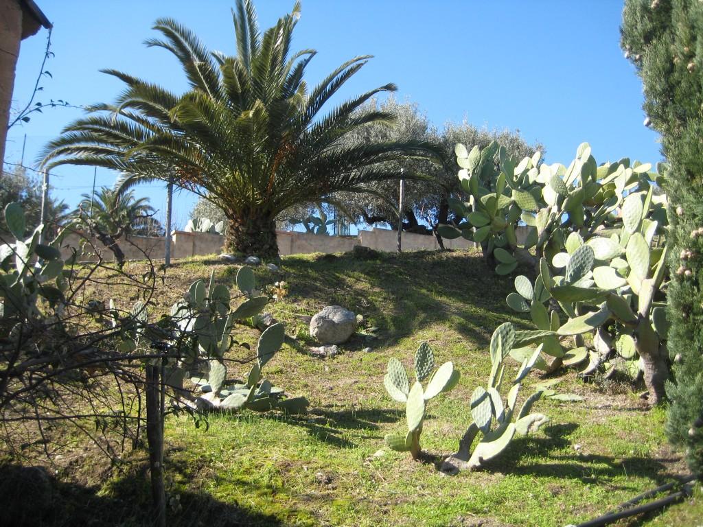 Palmen en cactussen op Borgo Ferri.